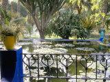 Majorelle Gardens, Marrakech (Marrakesh), Morocco, North Africa, Africa