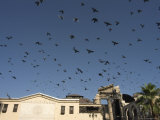 Pigeons in Umayyad Mosque Courtyard, Damascus, Syria, Middle East
