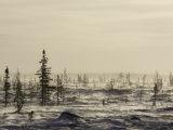Snow Storm, Blizzard, Churchill, Hudson Bay, Manitoba, Canada