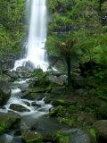 Erskine Falls, Waterfall in the Rainforest, Great Ocean Road, South Australia, Australia