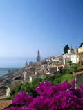 Bougainvillea in Flower, Menton, Alpes-Maritimtes, Cote d'Azur, Provence, French Riviera, France