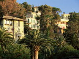 Hillside Mansions Amongst Palms, Santa Margherita Ligure, Portofino Peninsula, Liguria, Italy