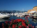 View Across the Harbour, Santa Margherita Ligure, Portofino Peninsula, Liguria, Italy