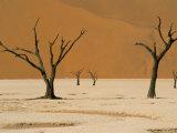 Dead Vlei, Sossusvlei Dune Field, Namib-Naukluft Park, Namib Desert, Namibia, Africa