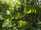 Rainforest Vegetation, Hanging Bridges Walk, Arenal, Costa Rica, Central America