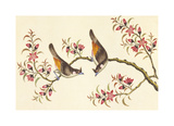 Birds And Flowers On Branch