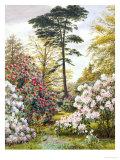 Pretty Woodland Garden