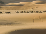 Camel Caravan on the Erg Chebbi Dunes, Merzouga, Tafilalt, Morocco