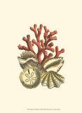 Coral Medley II