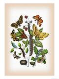 Moths: Eriogaster Rimicola, E. Catax