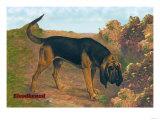 Bloodhound Champion