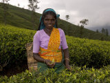Portrait of a Woman Tea Picker, Tea Hills, Hill Country, Nuwara Eliya, Sri Lanka, Asia