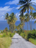Palm Lined Road to Bathsheba, Barbados, West Indies, Caribbean, Central America