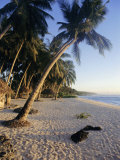 Palm Trees and Beach at Sunset, Western Samoa, South Pacific Islands, Pacific
