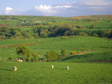 Farming Countryside, County Antrim, Ulster, Northern Ireland, UK, Europe