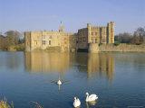 Swans in Front of Leeds Castle, Kent, England