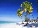 Palm Trees, White Sandy Beach and Indian Ocean, Jambiani, Island of Zanzibar, Tanzania, East Africa