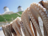 Octopus Drying in the Sun, Mykonos, Cyclades Islands, Greece, Europe