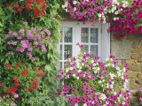 Farmhouse Window Surrounded by Flowers, Lile-Et-Vilaine Near Combourg, Brittany, France, Europe