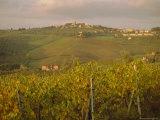 Vineyard, Tuscany, Italy, Europe