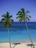 Palm Trees on Deserted Beach, Antigua, Caribbean, West Indies, Central America