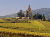 Church in Vineyards, Hunawihr, Alsace, France, Europe