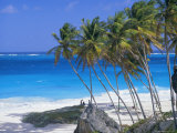Palm Trees and Beach, Bottom Bay, Barbados, Caribbean, West Indies, Central America