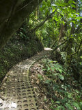 Hanging Bridges a Walk Through the Rainforest, Arenal, Costa Rica