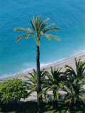 Palm Trees and Baie Des Anges, Nice, Cote d'Azur, Alpes-Maritimes, Provence, France, Europe