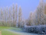Hoar Frost on Trees in Kent, England