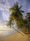 Palm Trees and Beach, Pigeon Point, Tobago, Trinidad and Tobago, West Indies