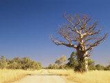 Boab Tree and Gravel Road, Kimberley, Western Australia, Australia, Pacific