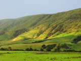 Pasture and Hills, Southland, South Island, New Zealand, Pacific