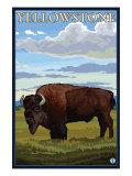 Bison Scene, Yellowstone National Park