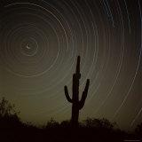 Star Trek Over Cacti, Tracing Stars as They Move Round North Star, Tucson, Arizona, USA