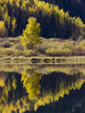 Aspens in Fall Colors Reflected in Crystal Lake, Near Ouray, Colorado