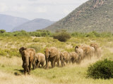 Line of African Elephants (Loxodonta Africana), Samburu National Reserve, Kenya, East Africa