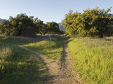 Divided Path on the Multi-Use Trail System in Ojai, California
