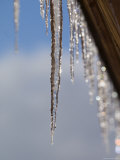 Detail of Icicles Melting in Truckee, Lake Tahoe, California