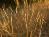 Prairie Grass at the Charles M. Russell National Wildlife Refuge
