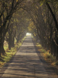 Rural One-Lane Road under Cover of Trees