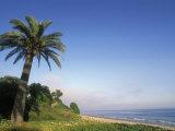 Palm Tree, Beach and Fog at Refugio Beach State Park, California