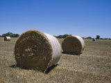 Round Hay Bales in a Farm Field against a Vast Blue Sky, Australia