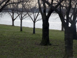 Trees Line the Potomac River in Washington, D.C.