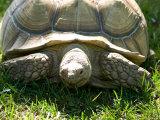 Tortoise at Lincoln Children's Zoo, Nebraska
