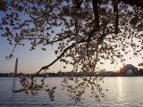 Washington Monument and Jefferson Memorial with Cherry Blossom Trees, Washington, D.C.