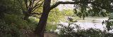 Trees Near a Pond in a Public Park, Central Park, Manhattan, New York City, New York, USA