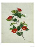 Painting- Japanese Camellia , 19th Century