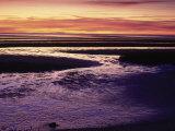 Tidal Flat at Sunset, Cape Cod, MA