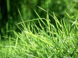 Grass Detail, Scotland
